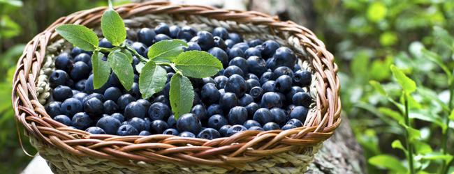 fresh blueberries in a basket